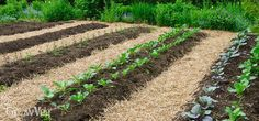 In this video and article we're going to explore just how no-till gardening can save you time and effort - and all while boosting the health and vitality of your soil...