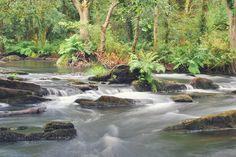 #Galicia bonita y sus fragas verdes. . . #galiciamola  #presumedegalicia  #naturaleza  #nature