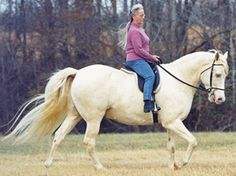 Soft Touch for Gaited Horses: Using a Snaffle with John Lyons / EquiSearch