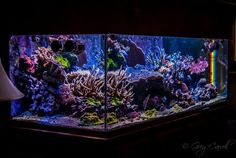 Greg Carroll's (gcarroll) 225 US-Gallon Reef Aquarium