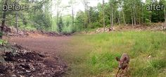 Before and After Clearing Land - Where to begin