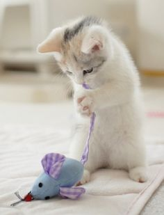 cat & mouse #cats