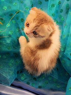 """""""In the image of the lion made He kittens, small and curious."""" --Heinrich Heine"""