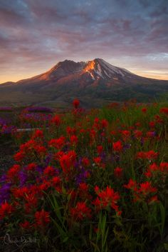 Mt. St. Helens, National Volcanic Monument, Washington; photo by Candace Bartlett