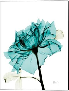 22 Best Xray Flower Art , Xray Flowers Photography images