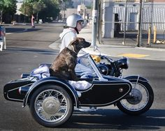 BMW motorbike with sidecar. Badass Motorcycle Helmets, Ural Motorcycle, Classic Motorcycle, Bmw Motorcycles, Vintage Motorcycles, Bike With Sidecar, Harley Davidson, Biking With Dog, Cool Bicycles