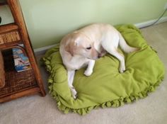 DIY doggy bed/floor pillow! sooo easy! no sewing! step by step & No-Sew Pet Beds! (fleece \u0026 old pillows you can just tie the sides ... pillowsntoast.com