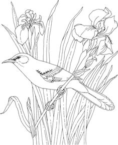 printable version of Mockingbird and Iris Tennessee State Bird and Flower coloring page