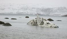 whale skeleton Russia murmansk leviathan