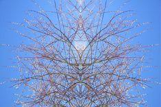 "Saatchi Art Artist Heather Bolton; Photography, ""Spring Jewel No 1"" #art"