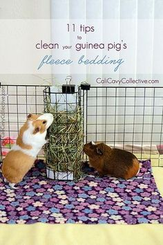 11 Tips to Spotless Fleece Bedding for Your Guinea Pig | Cali Cavy Collective | Bloglovin