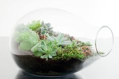 Open terrarium with succulents. So pretty!