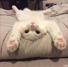 30 Cuddly Kittens For National Cuddly Kitten Day Kittens are adorable, and as our kitties grow, it's Cute Cats And Kittens, I Love Cats, Crazy Cats, Kittens Cutest, Funny Kittens, Ragdoll Kittens, Tabby Cats, Bengal Cats, Cute Funny Animals