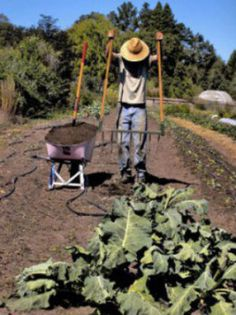 This is How One Organic Farmer Grosses $100K An Acre