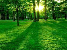 Photo#Hermosa#Paisaje#Verde