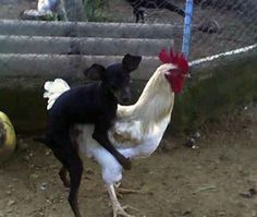 This forbidden love. | The 26 Cringiest Things That Have Ever Happened