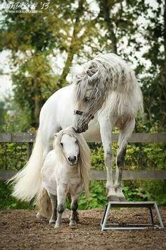 "scarlettjane22: "" World of Equines """