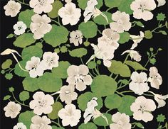 White nasturtiums from Marimekko