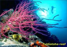 The Tubbataha Reefs National Marine Park is a sanctum consisting of over 1000 species of marine creatures and birds. The Reef is scheduled as a UNESCO World Heritage Site and is the most popular Philippine plunging site for tourists. The Tubbataha Reef has two coral reef atolls, the North and South Atoll.
