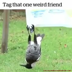 Best Picture For Cutest Baby Animals funny For Your Taste You are looking for something, and it is g Animal Jokes, Funny Animal Memes, Funny Animal Videos, Cute Funny Animals, Funny Animal Pictures, Cute Baby Animals, Funny Cute, Animals And Pets, Funny Horse Pics