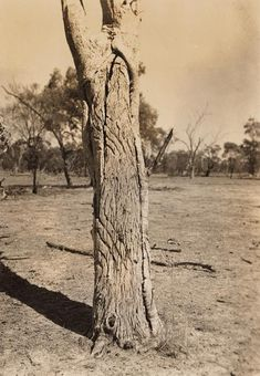 Bora Ground at Banaway [Collymongle],<br>near Mogil Mogil, NSW, c. details in the footer notes Ref: source: State Libray of NSW)<br><br> Aboriginal Art Symbols, Aboriginal Culture, Aboriginal People, Australian Aboriginal History, Australian Art, Australian Aboriginals, Indigenous Education, Tree Carving, Dot Painting