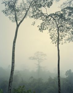 RAINFOREST, PAPUA NEW GUINEA BY FREDERIC LAGRANGE | Shop at surfaceview.co.uk
