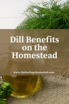 Head on over to the blog to learn about dill benefits and how to grow it!