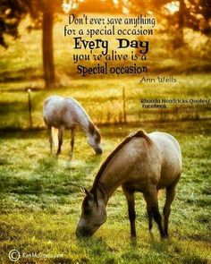 Everyday is special Simple Reminders, Horse Pictures, Day Use, Picture Quotes, Special Occasion, Wisdom, Horses, Thoughts, Sayings