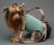 Dog purse?!?!  I am pretty sure dogs have legs for a reason...let them use them!