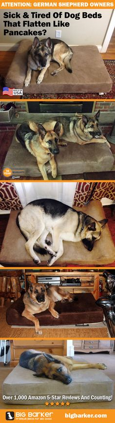 German Shepherd Beds by Big Barker... the most luxurious dog bed for big dogs like the German Shepherd | See more pictures at http://bigbarker.com