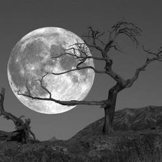 Wow! That's a powerful shot! Love it! Looks like the tree grabbed the moon...<3