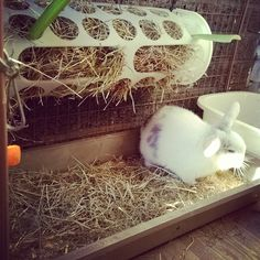 The Best Hay Rack Ever for your Bunny, Large and Cheap £1.50 Ikea Hack!! Tiggy Winkles Bunnies.
