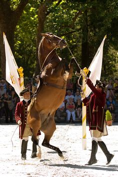Cavalo lusitano a executar uma curveta em demonstração de Arte Equestre.