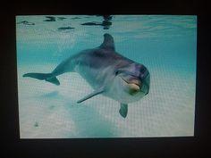 "Día 02: Mi nombre empieza con... (My name begins with...). #FMSPhotoADay  ""D"" de Delfín (D for Dolphin)"