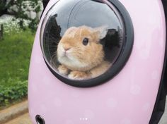 Bunny in a rocket? Baby Animals Pictures, Cute Animal Pictures, Cute Little Animals, Cute Funny Animals, Cute Baby Bunnies, Cute Babies, Fluffy Animals, Animals And Pets, Bunny Care