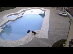 【画像あり】ネッコ、プールで楽しそうにプカプカする | 2ちゃんねるスレッドまとめブログ - アルファルファモザイク