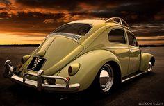 Bug's Bedtime by Steve Shelley