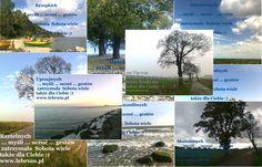Sobota ... jesień 2014 ...  .... więcej na blogach : Przemyślenia o poranku : http://pierwszamysl.blogspot.com/ o szukaniu pracy : http://bez-etatu.blogspot.com/ Widok z okna i komentarz poranka: http://jakimon.blogspot.com o miłosnych perypetiach : http://iruchna.blogspot.com