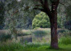 Några timmar i Boulognerskogen, Gävle - Fotosidan Country Roads, Nature, Beautiful, System Camera, Pictures, Naturaleza, Nature Illustration, Off Grid, Natural