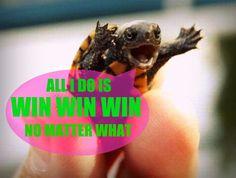 DZ Turtle #win #winning #DeltaZeta
