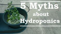 Are you thinking of keeping a hydroponic garden? Organic Hydroponics, Indoor Hydroponics, Hydroponic Growing, Hydroponic Gardening, Growing Plants, Sustainable Gardening, Compost Tea, Photosynthesis, Potting Soil