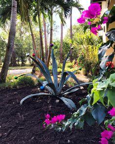 Tropical Gardens, Tropical Plants, Tropical Christmas