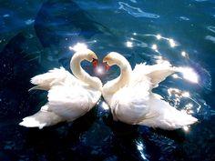 Pure love.