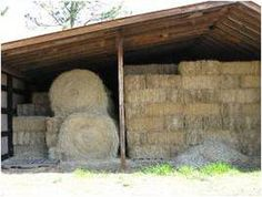 All About Hay. In this article from Practical Horseman magazine you?ll find out all you need to know to make sure your horse gets the most from his hay?the key differences in types of hay, how to judge hay quality and tips for feeding and buying hay. Horse Shelter, Horse Stables, Horse Barns, Horse Hay, Horse Feed, Hay Feeder For Horses, Pallet Barn, Farm Layout, Farm Plans