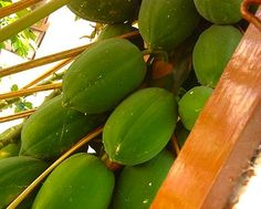 30 Second Mom - Beth Aldrich: Papaya: High in Vitamins & Helps with Digestion