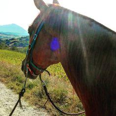 Horse in Bellante