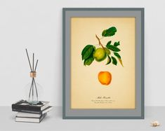 Items similar to Apple decor art Vintage Botanical poster picture digital art antique home living room image wall print cubicle decor drawing watercolor art on Etsy Apple Art, Old Images, Botanical Wall Art, Poster Pictures, Cubicle, Wall Prints, Watercolor Art, Digital Art, Living Room