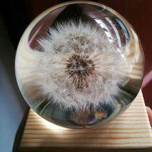 Real dandelion paperweight