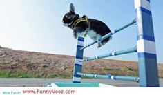 awesome Rabit is on race - Funny animals