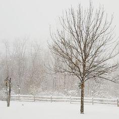 #winter2016 #snowmageddon2016 by jambabiimo